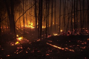 Incendio en rocha 2
