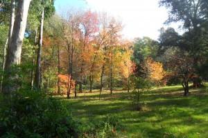 El Arboretum Lussich sorprende a los visitantes con su diversidad.