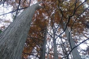 En el arboretum conviven 700 especies exóticas de todo el mundo con 80 autóctonas.