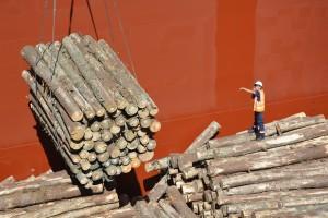 A partir de que se inicia la carga en el puerto, se trabaja las 24 horas del día en turnos de ocho horas durante aproximadamente una semana.
