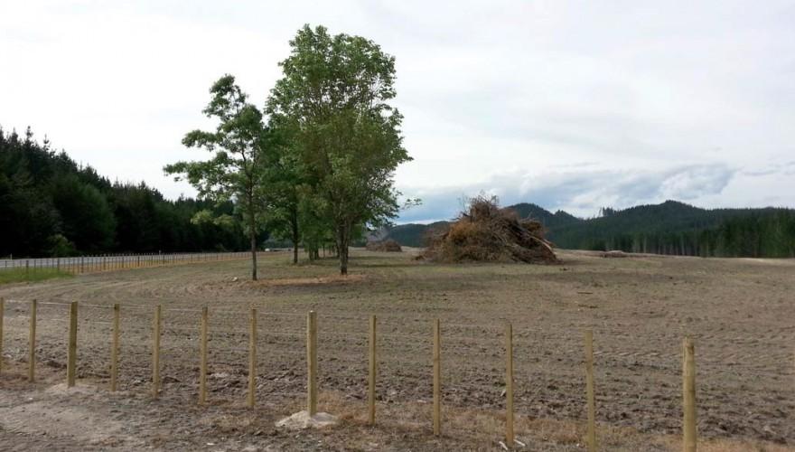 En Nueva Zelanda, tierras previamente dedicadas a forestación productiva se reconvirtieron exitosamente en tierras de pastoreo.