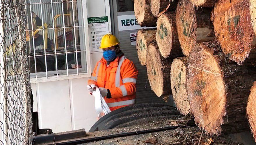 La pandemia por coronavirus genera nuevos protocolos de trabajo en el sector forestal.